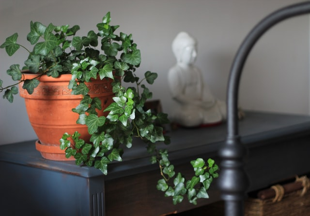 A Healthy Living Tip: Have Indoor Plants