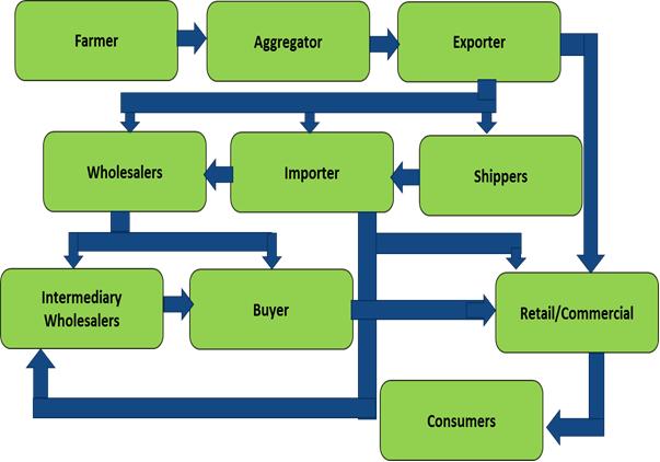 Frozen Fruit  | Coherent Market Insights