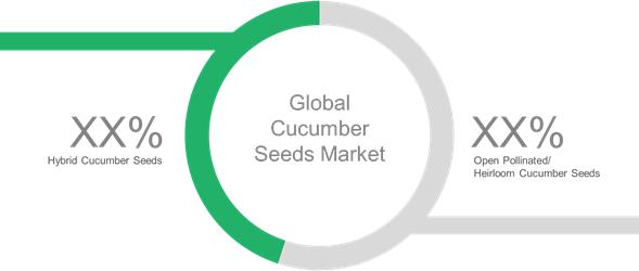 Cucumber Seeds  | Coherent Market Insights