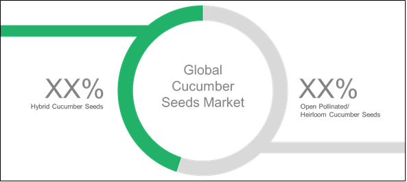 Cucumber Seeds  | Coherent Market Insights