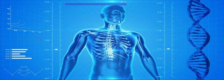 Warmer Ambient Temperatures and Gut Microbiota Might Prevent Osteoporosis, Study Suggests