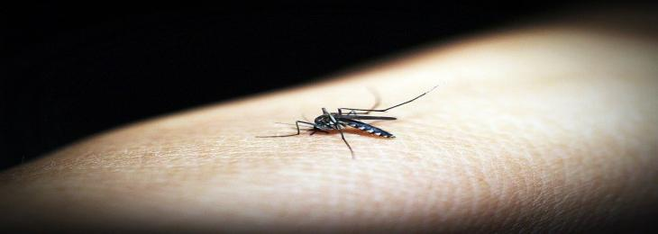 Scientists Explain How Climate Change Affects Transmission of Malaria