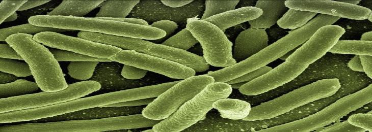Anti-Transcription Mechanism Can Treat Multiple Myeloma