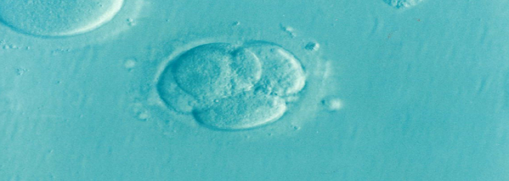 According to a new study, development in the human embryo's axis is generated