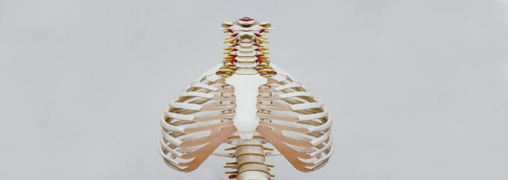 Spinal Implant Bloats Like A Little Air Mattress For Blocking Severe Pain