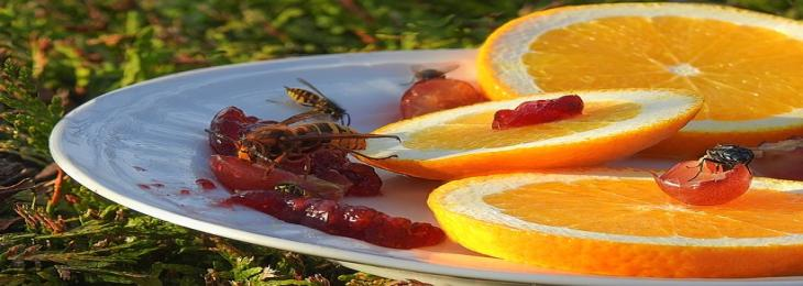 Fruit Fly Study May Help Improve Cancer Patients' Survival