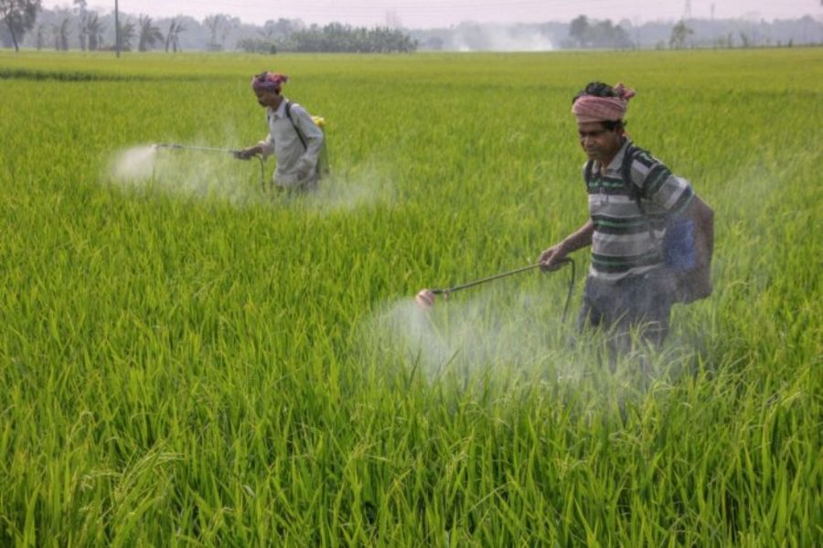 Government to Ban 27 Insecticides and Pesticides in India